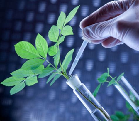 Mba In Biotechnology In Uk by Biotechnology Dissertation