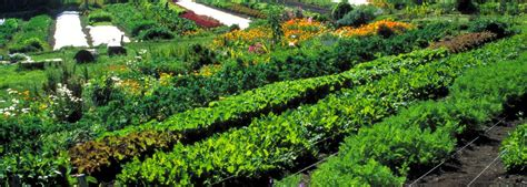 Permaculture Agriculture ? The Transition to a Sustainable