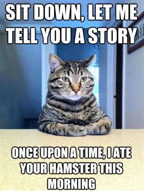 Internet Cat Meme - 20 super funny animal memes funny animal memes and internet