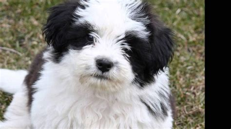 what is the breed what is friendliest breed breeds puppies do you need friendliest breed