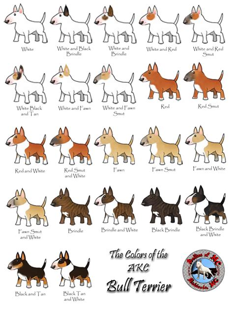 dog color pattern names photo akcbullterriercolors jpg dogs pinterest bull