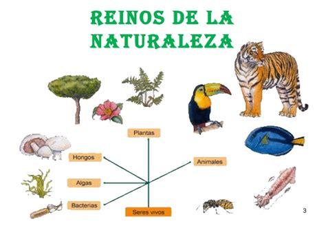 imagenes reino animal fotos de animales imagenes del reino animal tattoo