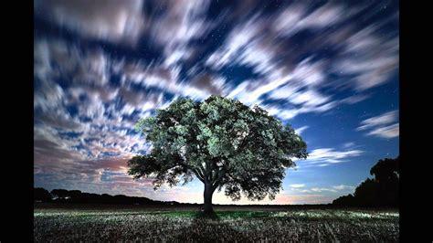 imagenes de jardines nocturnos paisajes nocturnos youtube