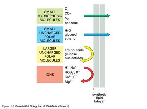 graphics gallery  antibody molecule