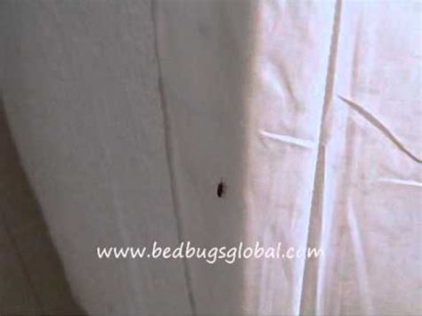 kill bed bugs naturally kill bed bugs naturally with cedar bug free wmv how to save money and do it yourself