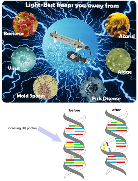 how ultraviolet light kills bacteria 254nm led uv water sterilizer in water tank to kill