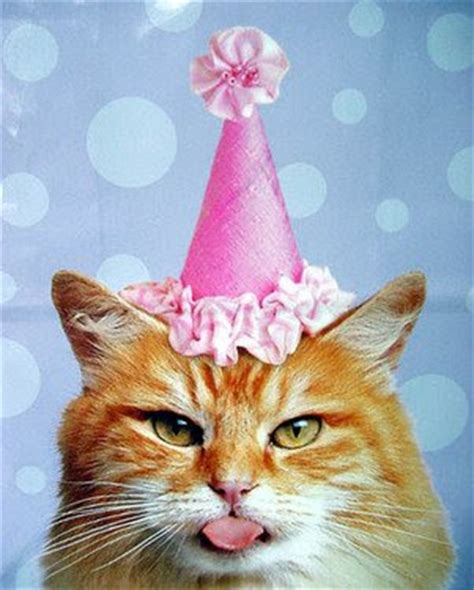 cat birthday quotes quotesgram