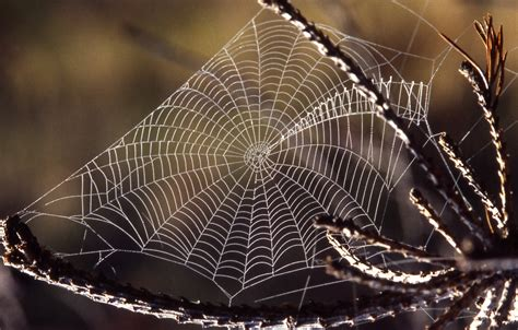 by web spider webs used like harps 183 guardian liberty voice