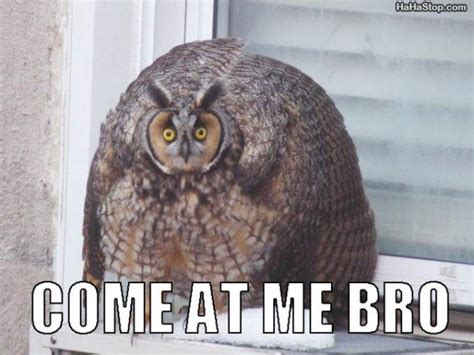 Meme Owl - weak thrust better know a meme come at me bro