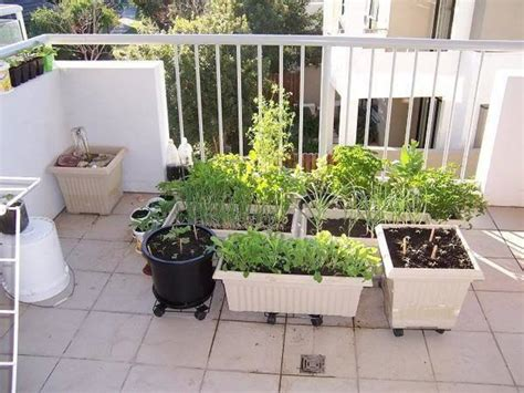 6 Tips To Start Balcony Garden Ideas For Vegetables Apartment Gardening Ideas