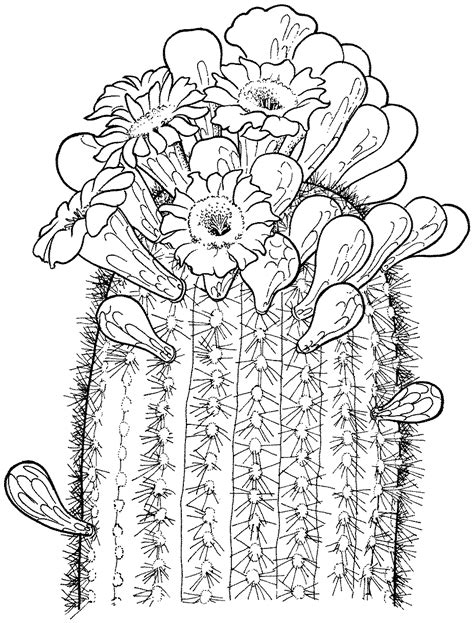 printable cactus coloring pages coloring me