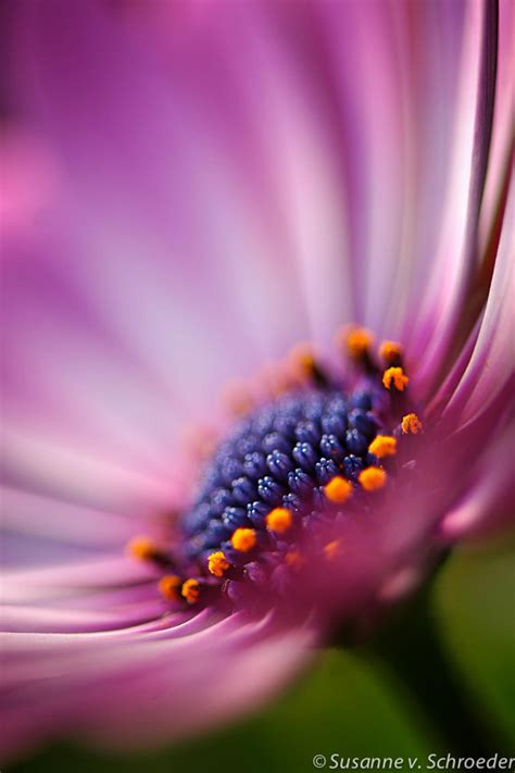 flower photography macro flower photography on pinterest flower photography