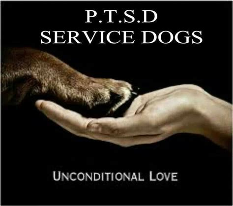 therapy dogs for ptsd ptsd service dogs are heros favorite places spaces things pi