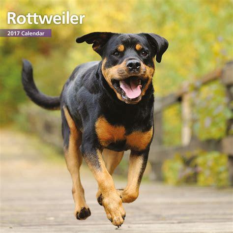 colorado rottweiler reviews rottweiler 2017 mini calendar ebay