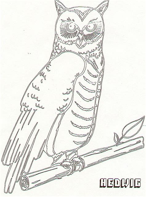 coloring pages of harry potter and the sorcerer s stone year i harry potter and the sorcerer s stone