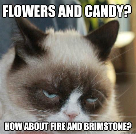 Random Cat Meme - random images cat memes wallpaper and background photos
