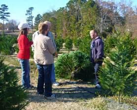 christmas tree prices in arkansas reasonable prices for fresh trees at motley s tree farm rock arkansas