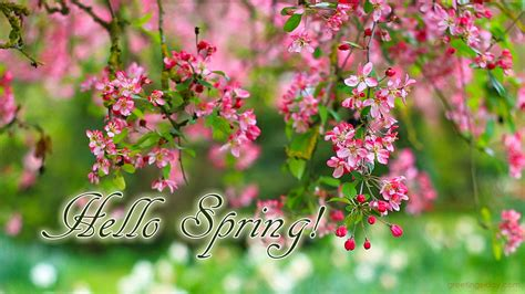 what is spring greeting cards for every day welcome spring 10 amazing