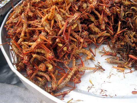 Belalang Goreng Belalang Gurih gurihnya serangga sebagai sumber protein hewani nyi omas