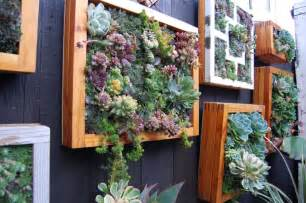 ewa in the garden low maintenance succulent vertical garden
