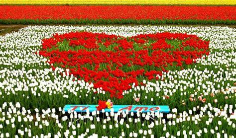 fiori s valentino san valentino 1 milione di ti amo con i fiori spesa