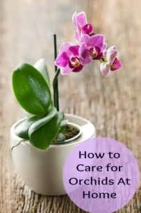 how to care for orchids at home bonsai other potted