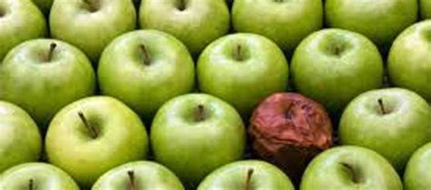 bad apples rogue employees and lone wolves the fine