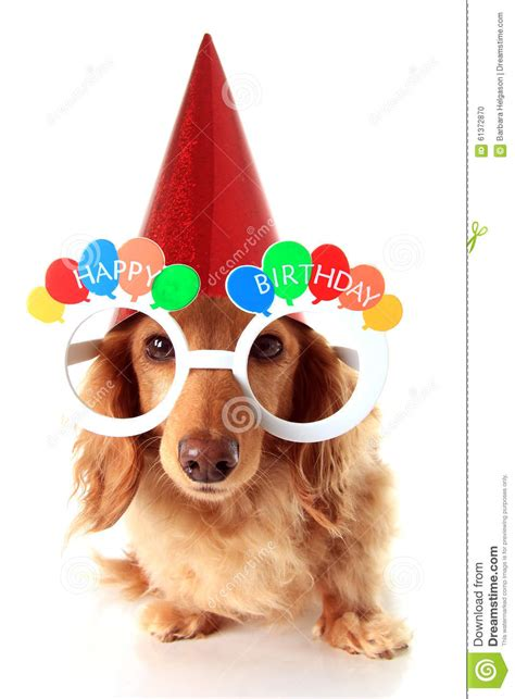 Happy Birthday Clip With Dogs Free by Happy Birthday Stock Photo Image Of Happy Festive