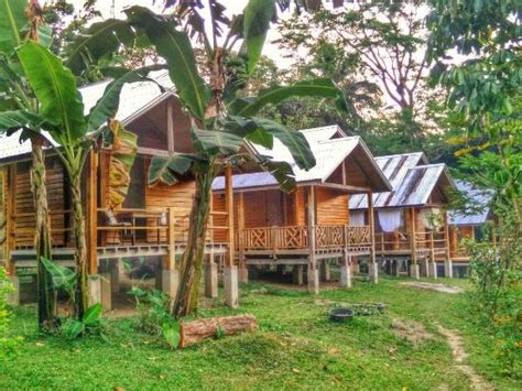 Link Harold Dieterles Favorite Place by The Best Place Picture Of Harold S Ecolodge Dumaguete