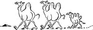 kamele ausmalbild amp malvorlage tiere