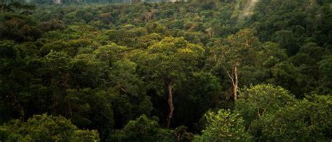 amazon forest amazing amazonia amazon rainforest 46 pics