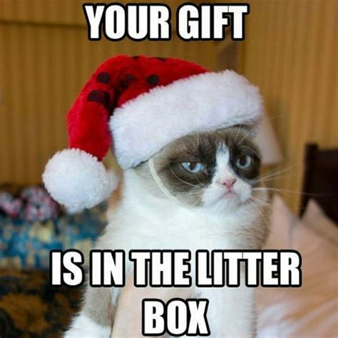 Christmas Gift Meme - 16 of the best grumpy cat memes catster