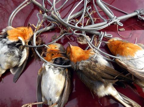 provincia di livorno ufficio caccia contro la caccia tutto l anno il comune aderisce alla