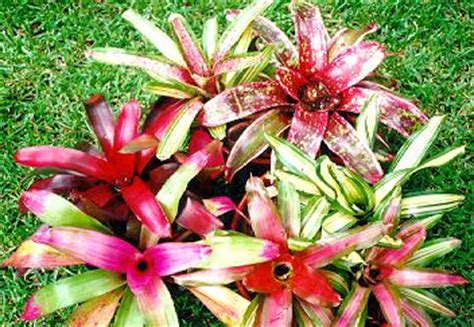 types of plants in a tropical rainforest classroom types of rainforest plants