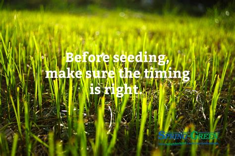 lawn doctor lawn care insights spring power seeding