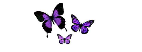 imagenes png mariposas imagenes png mariposas imagui