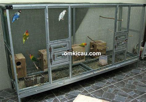 Krodong Lovebird Bukan Murai bhs bf surabaya murai batu dan lovebird bukan berarti berhenti lomba klub burung
