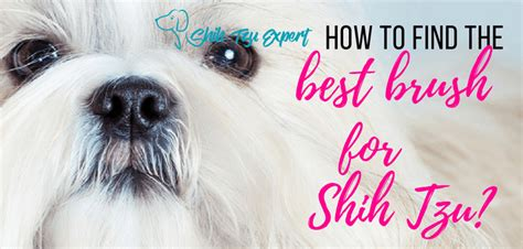 best comb for shih tzu best brush for shih tzu reviews and a buyers guide march 2018