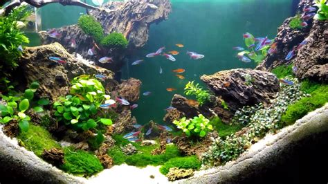 Aquascape Style by Aquascape Design