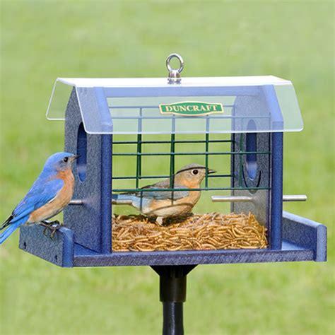 duncraft com duncraft bluebird haven feeder