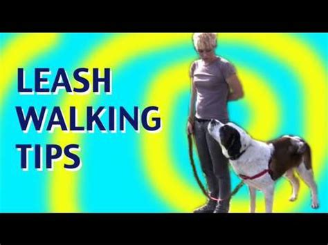 how to not to pull on leash how to teach a not to pull on leash leash walking tutorial find