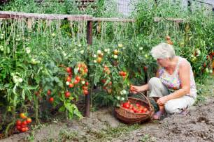 Urban Organic Gardener - basic home gardening ideas and tips ace gardener