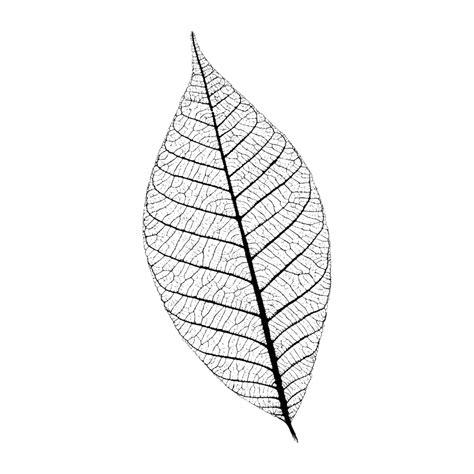 printable skeleton leaves g510a skeleton leaf large wood mounted sts
