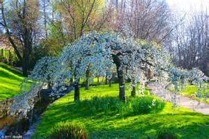 valence arbre fleuri parc jouvet
