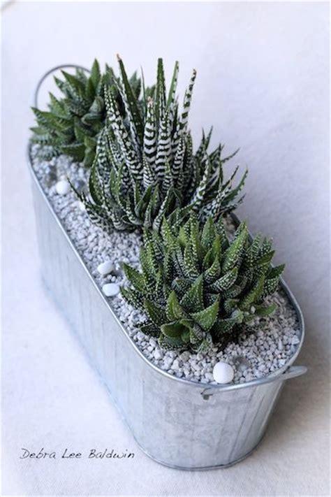 low light succulents houseplants 144 best images about plants succulents and cactus on