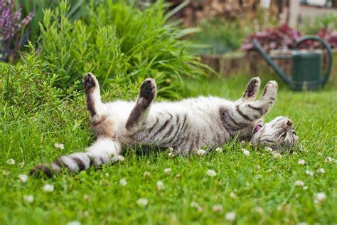 katzen vertreiben aus dem garten katzen vertreiben katzenabwehr katzen vertreiben katzen