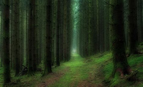 deep forest green 12 most beautiful forests in the world