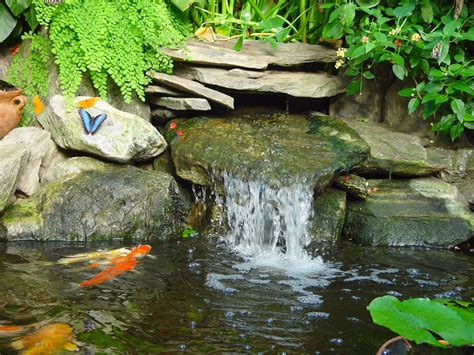 Butterfly Garden Ma by Top 5 Butterfly Gardens To Visit Drive The Nation