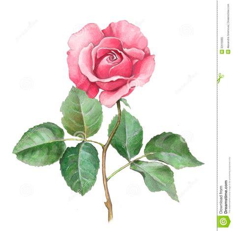 how to ส น ำ ตอน มาห ดวาดดอกก หลาบก นเถอะ 2 พล ช พเข ยนฮาวท dek d