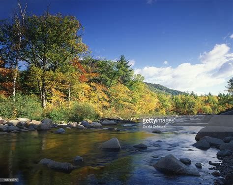 Autumn White by River In Autumn White Mountains National Forest New
